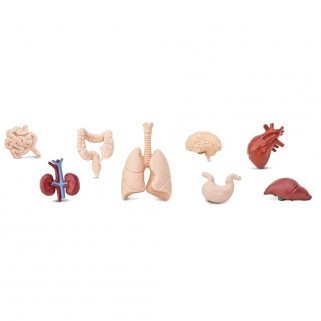 Figurines organes